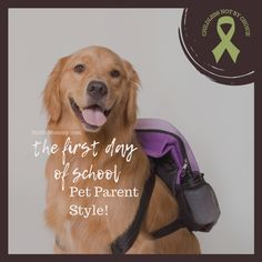 We're chatting about the first day of school. I mention pics of two-legged kiddos. But the focus is on Maddie, my four-legged kiddo. Truly, this is a #DogMomProud post! Since August can be triggering, realize that this blog is likely to stir emotions—griefy & joyous… | Read the full blog at Not So Mommy..., an infertility, childless, dog mom blog. | Dog Mom | Dog Moms | Dog Mommy | Dog Mom Blog | Dog Mom Blogs | Dog Mom Blogger | Pet Parent | Pet Parents | Fur Mama | Fur Mamas | Fur Mom | Dogs Doggie Day Camp, Cute Puppy Photos, School Pictures, First Day Of School, Mom Blogs, Four Legged, Dog Mom, Make You Smile, Mom And Dad