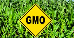 New England Journal of Medicine article calls for labeling of GM foods