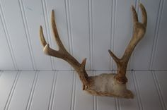 "Nice pair of old antlers. These horns measure 8"" tall, 8"" wide, 5"" deep. Get in on the hottest home accessory~perfect for a table top or book shelf. Rustic shabby chic decor~ [SOLD]"