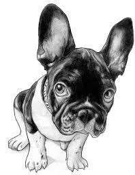 Resultado de imagem para french bulldog