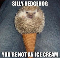 Hedgehog ice cream