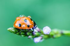 ladybug under water She's A Lady, Lady In Red, Lady Bugs, Water, Animals, Ladybugs, God, Madame Red, Gripe Water