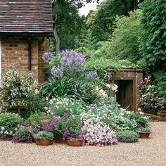 Country garden with billowing border Echeveria, ricinus and lilies soften a mellow brick wall, while a gravel path adds to the relaxed feel.