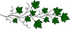 Ivy Leaves drawings - Google Search