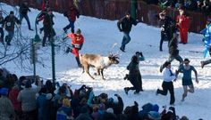 Running with the Reindeer- Fur Rondy Anchorage AK