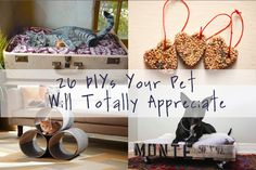 Celebrate your furry friends. | 36 Ways To DIY Every Part Of Your Life