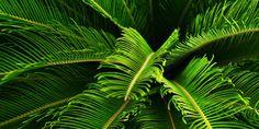 tropical rainforest in australia - Google Search