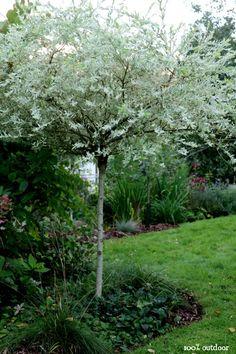 100% outdoor: Sensommar Hakuropaju Plants, Plant, Planets