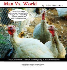 essays about turkeys