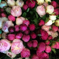and yeah, we got em'  for all you #peony lovers out there. we're doing burgundies and pinks and plums for our #thanksgivingcenterpieces