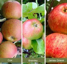Family Le Tree Online From Jacksons Nurseries Fruit Plants Trees