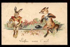 LAPINS RABBITS.RENARD FUMEUR DE CIGARETTE.FOX CIGARETTE SMOKER.