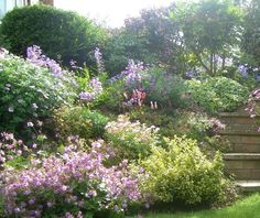 Beautiful summer border. Nothing like mounds of flowers beside a lawn and stone steps.