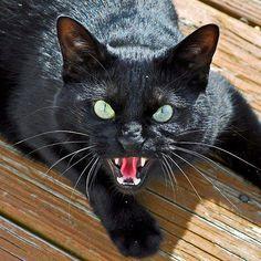 Hisssssssssssssssss! Spooky black cat with green eyes