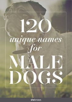 130 unique male dogs names you won't mind calling out at the park