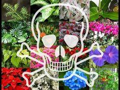 Las 10 Plantas Venenosas que Tenemos En Casa - YouTube