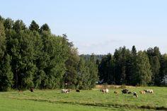 Luomutuotanto lisääntyy Pohjois-Karjalassa. North Karelia, Finland