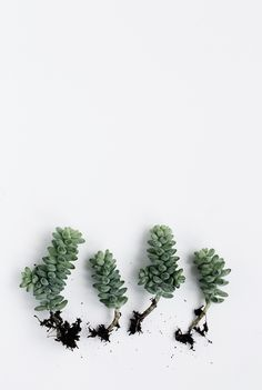 Succulents - Cereal Magazine Volume 6