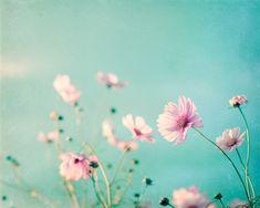 Flower Photography - aqua blue pink wall art floral photo pastel decor pale spring nature print whit - makes me happy - Blumen Art Floral, Art Mural Floral, Pastel Floral, Pastel Blue, Art Mural Vert, Art Mural Rose, Pastel Decor, Pastel Art, Green Wall Art