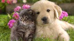 Cute !!