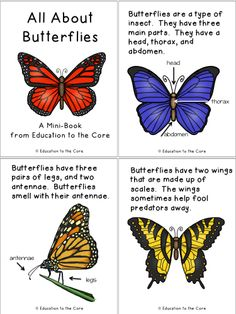 Butterfly Mini Book and Writing Reflection and a Special Butterfly Wheel Freebie! Kindergarten Science, Teaching Science, Science Activities, 1st Grade Science, Butterfly Facts For Kids, Butterfly Life Cycle, Butterfly Project, Bug Crafts, Preschool Themes