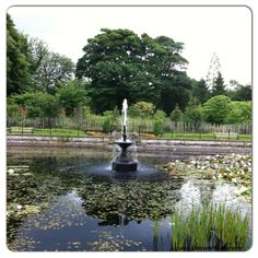 stunning fish pond with a beautiful fountain