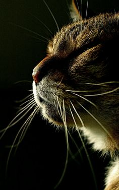 What is this cat thinking about? The number of birds it killed already or is still  going to kill?