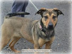 Jan 14/15 Tia German Shepherd Dog Mix • Young • Female • Large  (ID #1112) Super sweet and ultra friendly female shepherd mix . A little on the hyper side but nothing that some obedience classes and exercise won't fix!  Home without small children (< 5yrs old) Mahoning County Dog Pound & Adoption Center 589 Industrial Rd. Youngstown, OH 44509