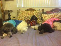 3 dog night Sarge, Phoebe & Molly