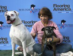 Quite well behaved #petsforpatriots #bigdogs #puppylove #doglover #littledogs