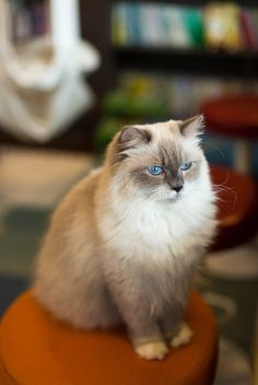 Bluepoint Mitted
