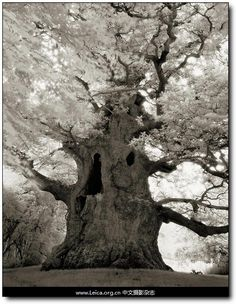 Old trees # Pinterest++ for iPad #