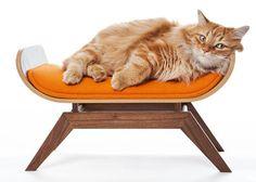 Mooi design en een gelukkige/verwende kat? Jep, het kan!