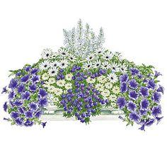 "Balcony plants set ""Blue-White Dream"""