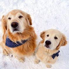 Snow fluffs