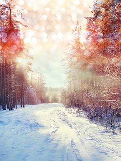 Snowy Sunrise / 3116