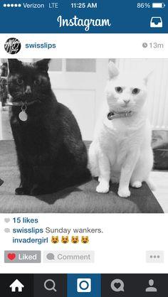 Sam Hammond's cats