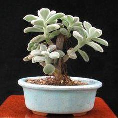 Succulents - Fat plants 1