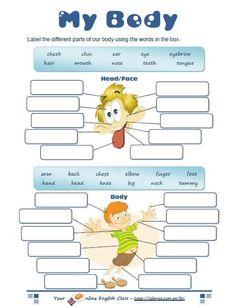 body parts worksheet:
