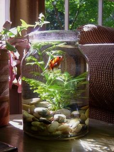 glass fish bowl decoration ideas, decorative fish bowl plants ...