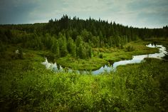 Ness Creek, One of the best, most beautiful places on earth. Festivals In July, Canadian Prairies, The Province, Fine Art Photography, Tourism, Places To Go, Beautiful Places, Around The Worlds, Canada