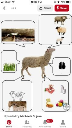 Cognitive Activities, Preschool Learning Activities, Teaching English Online, Sheep Farm, Farm Art, Literacy Stations, Farm Theme, Childhood Education, Projects For Kids