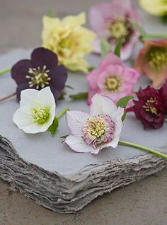 Floral scents from around the world. Deco Floral, Arte Floral, My Flower, Beautiful Flowers, Lenten Rose, Flower Photos, Planting Flowers, Floral Arrangements, Wedding Flowers