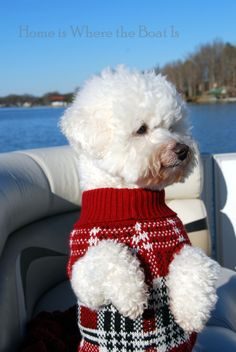 standing up - Bischon Frise. I will have this dog for Christmas 2013 Funny Animal Pictures, Funny Animals, Cute Animals, Cute Puppies, Cute Dogs, Dogs And Puppies, I Love Dogs, Puppy Love, Bichon Dog
