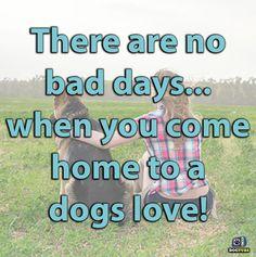 The German Shepherd German Shepherd Memes, German Shepherd Pictures, German Shepherds, When You Come Home, Hilarious, Funny, Dog Love, Cool Photos, Spaces