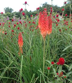 Color blocked gardens featuring orange, red, violet hues at Mohonk Mountain House, NY