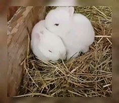 If you are looking for a family pet which is not only cute, but easy to keep, then look no further than a pet bunny. Cute Little Animals, Cute Funny Animals, Cute Baby Bunnies, Cute Babies, Fluffy Animals, Animals And Pets, Baby Kiss, Baby Baby, Cute Cars