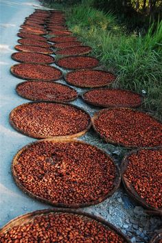 VIETNAM - Ben Tre, cacao drying by the roadside