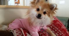 Well hello there, how are you doing? Little Puppies, Cute Puppies, Pet Health, Corgi, Wellness, Pets, Funny, Pictures, Animals