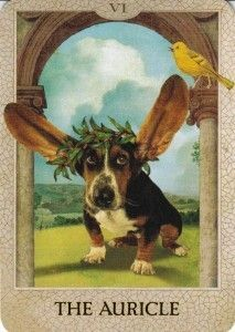 The Pet Reader - Worldwide Pet friendly Certified Tarot Reader for over 35 yrs…
